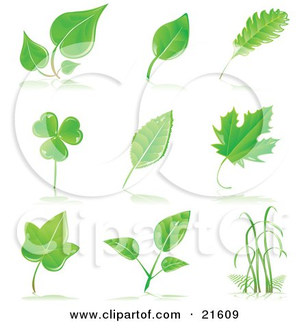 Clipart Illustration Graphic Of A Collection Of Maple Shamrock Birch And Other Tree Leaves And Grasses With Shadows On A White Background