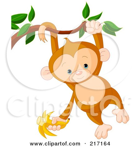 cute baby monkey swinging from a branch by his tail and arm and holding a banana