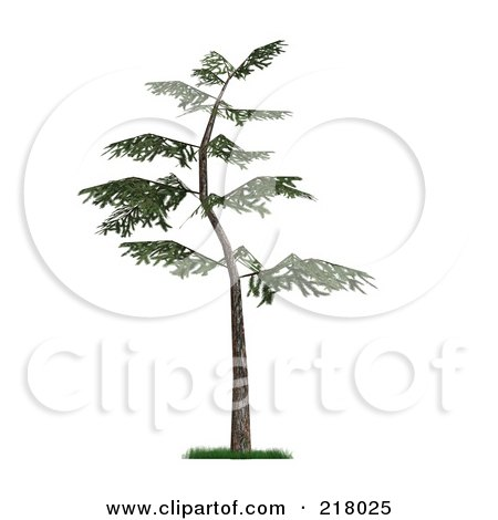 Royalty-Free (RF) Clipart Illustration of a 3d Curved Pine Tree With Green Foliage by Anastasiya Maksymenko