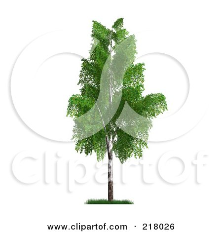 Royalty-Free (RF) Clipart Illustration of a 3d Mature Birch Tree With Green Foliage by Anastasiya Maksymenko