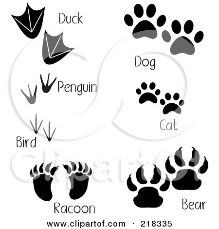 Royalty-Free (RF) Clipart Illustration of a Digital Collage Of Duck, Penguin, Bird, Raccoon, Dog, Cat And Bear Tracks With Words by Pams Clipart