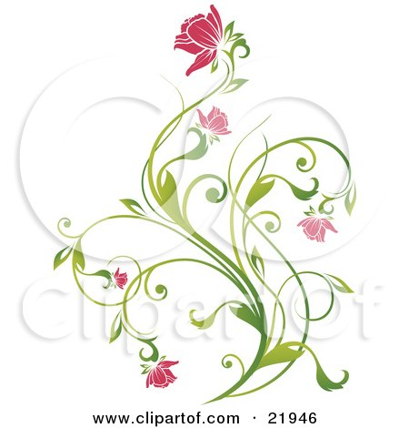 Clipart Picture Illustration of a Delicate Green Plant With Pink Blooming Flowers On A White Background by OnFocusMedia