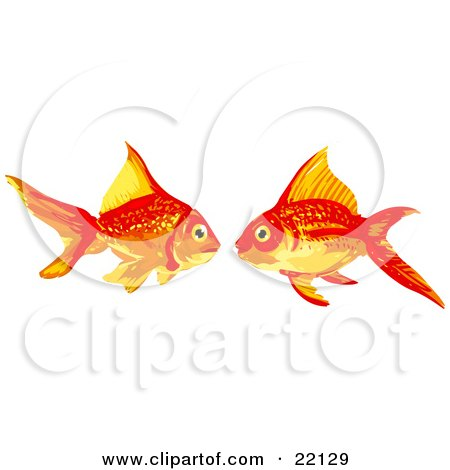 Clipart Illustration of a Pair of Two Goldfish in Love, Facing Each Other by Tonis Pan