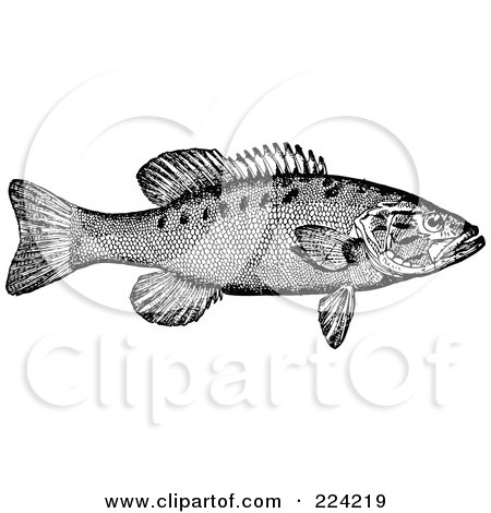 Black And White Smallmouth Bass Fish By BestVector