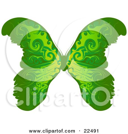 Clipart Illustration of a Beautiful Green Butterfly With Yellow Near The Body, On A White Background by Tonis Pan