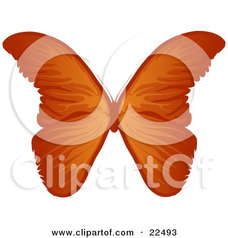 Clipart Illustration of a Beautiful Orange Butterflie With Gradient Tones, On A White Background by Tonis Pan