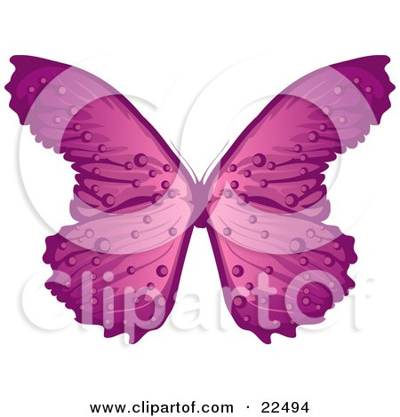 Clipart Illustration of a Pretty Purple And Pink Butterfly With Stripes And Dots, On A White Background by Tonis Pan