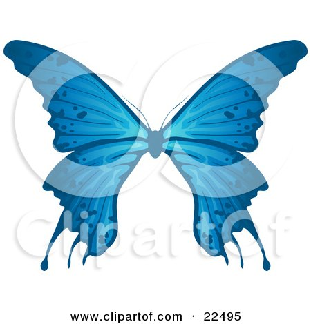 Delicate Blue Butterfly With Spots On The Wings, On A White Background Posters, Art Prints