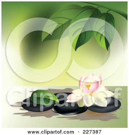 Royalty-Free (RF) Clipart Illustration of a Pink And White Lotus Flower On Spa Stones Under Leaves by Eugene
