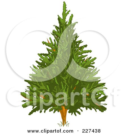 Royalty-Free (RF) Clipart Illustration of an Evergreen Christmas Tree by Pushkin