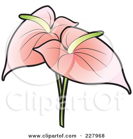 Royalty-Free (RF) Clipart Illustration of Two Pink Anthurium Flamingo Flowers by Lal Perera