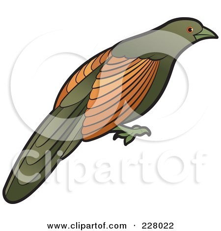 Royalty-Free (RF) Clipart Illustration of a Green Billed Coucal Bird by Lal Perera