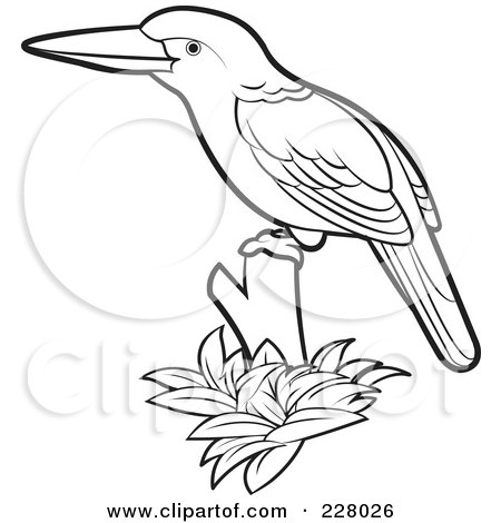 Kookaburra Coloring Page Royalty Free RF Clipart Illustration