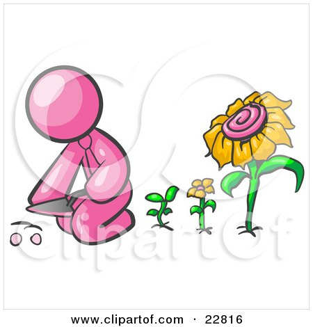 Clipart Illustration of a Pink Man Kneeling By Growing Sunflowers To Plant Seeds In A Dirt Hole In A Garden by Leo Blanchette