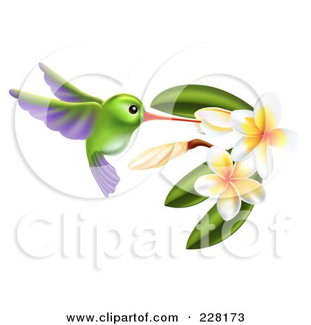 Royalty-Free (RF) Clipart Illustration of a Green And Purple Hummingbird With Plumeria Flowers by AtStockIllustration