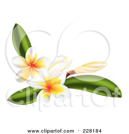 Royalty-Free (RF) Clipart Illustration of Plumeria Flowers And Leaves  by AtStockIllustration