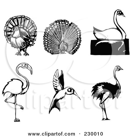 Royalty-Free (RF) Clipart Illustration of a Digital Collage Of Woodcut Styled Turkey, Peacock, Swan, Flamingo, Hummingbird And Ostrich Birds by xunantunich