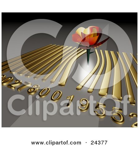 Clipart Illustration of a Beautiful Orange Rose Sticking Up Out Of A Golden Barcode on a Gray Background by Eugene