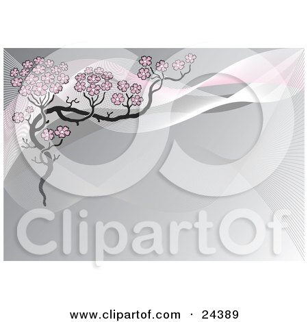 Cherry Blossom Tree Clip Art