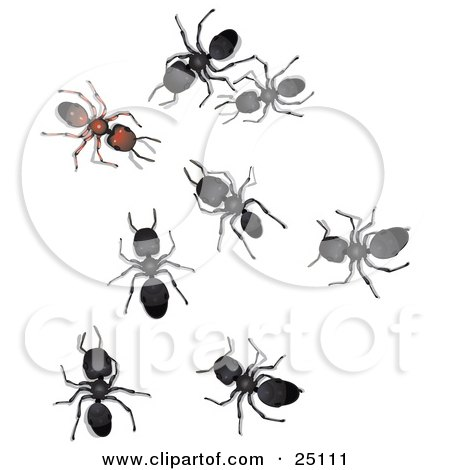 Clipart Illustration of Black Sugar Ants Staring At And Creeping Towards A Different Brown Ant, Symbolizing Leadership And Acceptance by Leo Blanchette