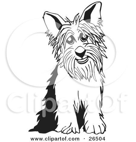 Clipart illustration of a yorkshire terrier dog sitting in black and white by david rey
