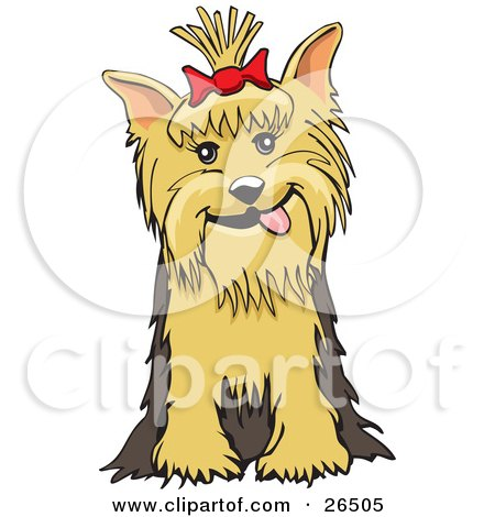Clipart Illustration of a Friendly Yorkshire Terrier Dog With A Bow In Her Hair, Sitting by David Rey