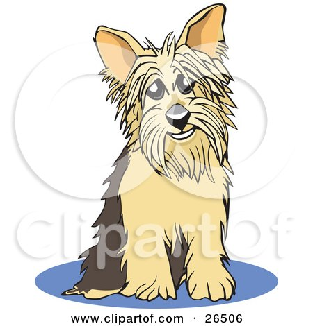 Clipart Illustration of a Yorkshire Terrier Dog Sitting On A Blue Rug by David Rey