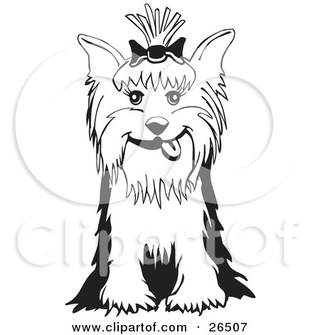 Friendly yorkshire terrier dog with a bow in her hair sitting in black and