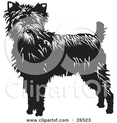 Clipart Illustration of an Alert Affenpinscher Dog Looking Front by David Rey
