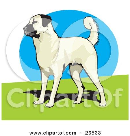 Clipart Illustration of an Alert Anatolian Shepherd Dog Standing On Grass by David Rey