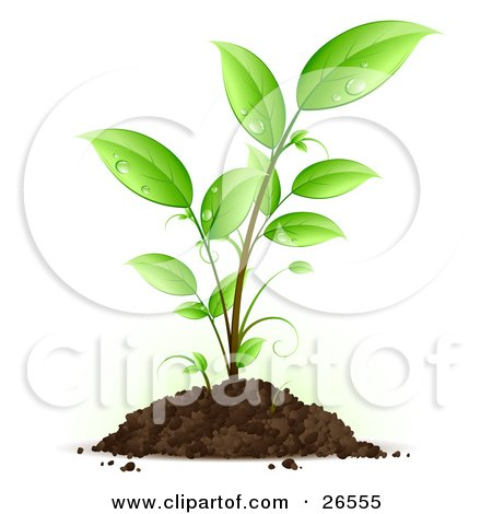 Clipart Illustration of a Seedling Plant With Drops Of Dew Scattered On The Green Leaves, Growing From A Pile Of Dirt by beboy