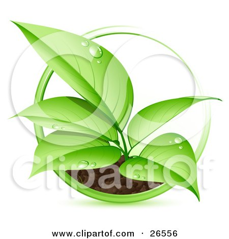 Clipart Illustration of a Green Seedling Plant With Dew Drops On The Leaves, Spurting From A Dirt Mound With A Green Circle Around It by beboy
