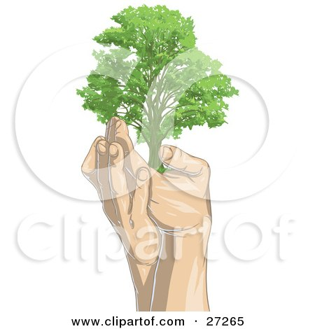 Clipart Illustration of a Tall, Green Adult Tree Being Held Up In A Pair Of Gentle Human Hands, On A White Background by Tonis Pan