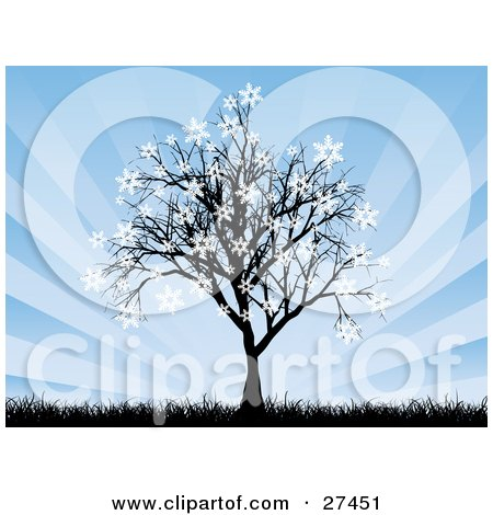 Bare Silhouetted Tree With Snowflakes Sticking To The Tips Of The Branches, With Tall Grasses And A Bursting Blue Background Posters, Art Prints