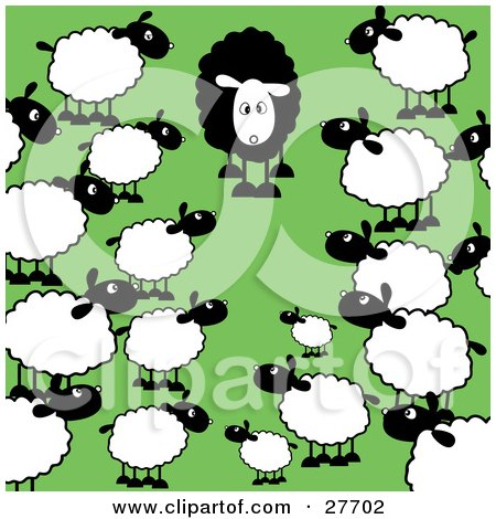 Clipart Illustration of a Crowd Of Regular White Sheep Staring In Awe At A Different Black Sheep In A Green Pasture by KJ Pargeter