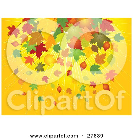 Clipart Illustration of a Bursting Yellow Background With Yellow, Brown, Orange, Green And Red Falling Maple Leaves In Autumn by KJ Pargeter