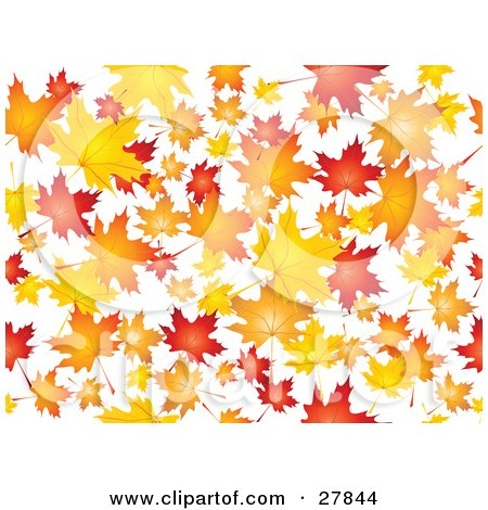 Clipart Illustration of a Background Of Orange, Red And Yellow Maple Leaves Falling Over White by KJ Pargeter