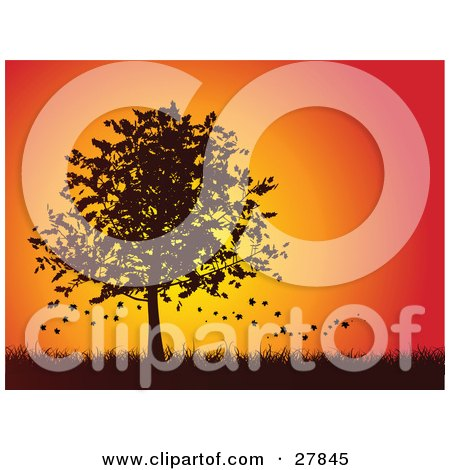 Clipart Illustration of Autumn Leaves Falling Off Of A Silhouetted Maple Tree In A Grassy Landscape Against An Orange And Red Sunset by KJ Pargeter