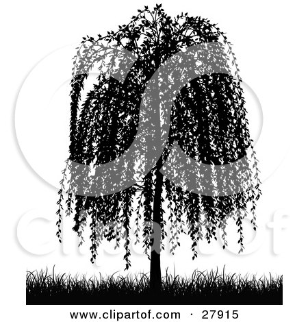 Weeping Willow Tree Black And White Tattoo Royalty-Free (R...