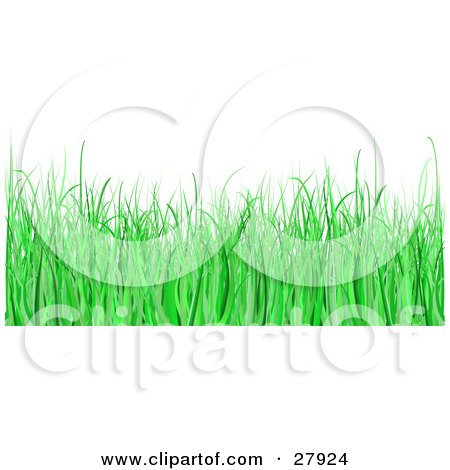 Clipart Illustration of a White Background With Green Blades Of Grass In A Lawn by KJ Pargeter