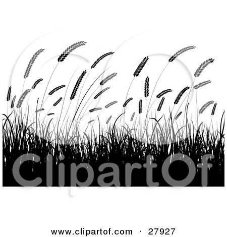 Clipart Illustration Of Silhouetted Wheat Grasses Waving