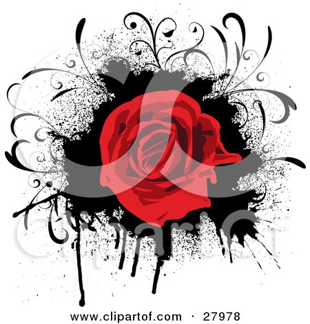 Clipart Illustration of a Blooming Red Rose Over A Grunge Black Dripping Splatter On A White Background by KJ Pargeter
