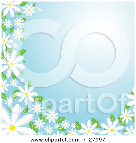 Clipart Illustration of White Daisy Flowers With Green Leaves, Bordering The Left And Bottom Edges Of A Blue Background by KJ Pargeter