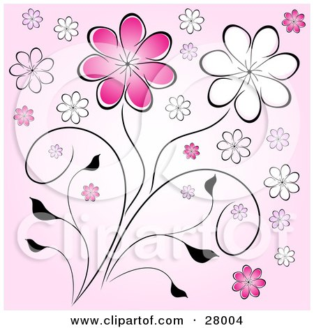 Clipart Illustration of Pink And White Daisy Flowers On Black Stems Over A Pink Background by KJ Pargeter
