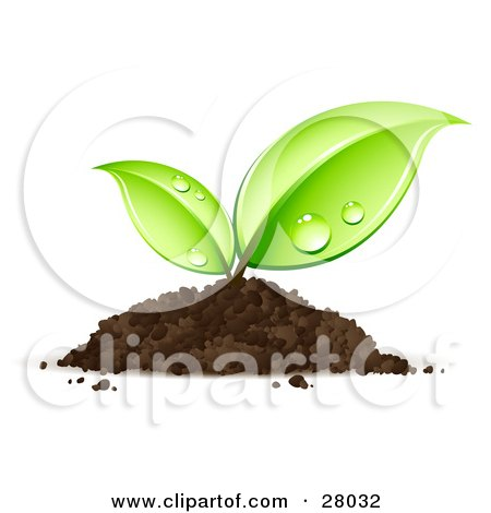 Clipart Illustration of a Sprouting Seedling Plant Emerging From A Pile Of Dirt With Dew On Its Leaves by beboy