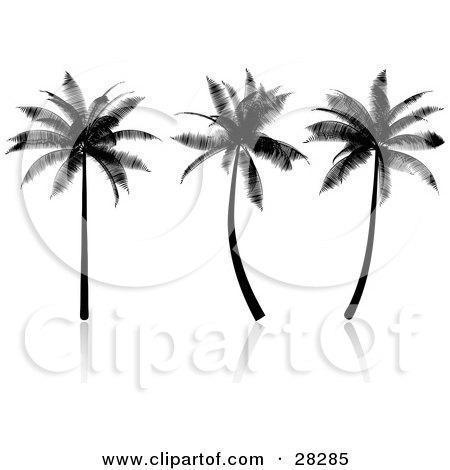 Clipart Illustration of Three Tropical Palm Trees Silhouetted In Black, On A Reflective White Surface by KJ Pargeter