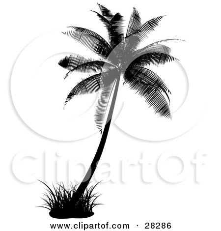 Palm+tree+tattoo+ideas
