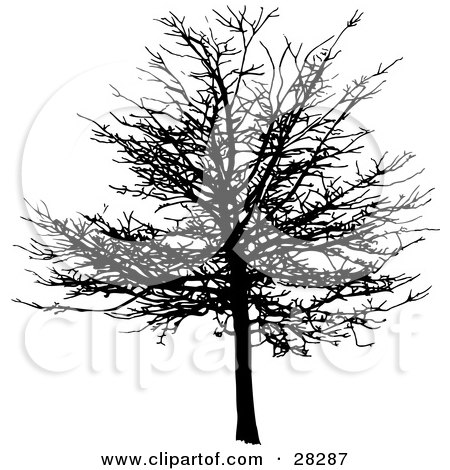 Clipart Illustration of a Black Silhouetted Bare And Leafless Maple Tree In Winter by KJ Pargeter