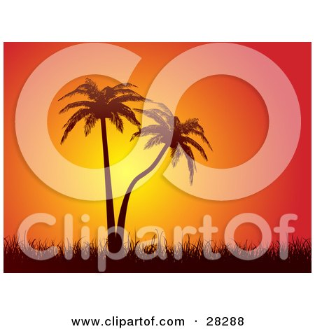 Clipart Illustration of Silhouetted Palm Trees With Tall Grasses Against An Orange Sunset by KJ Pargeter