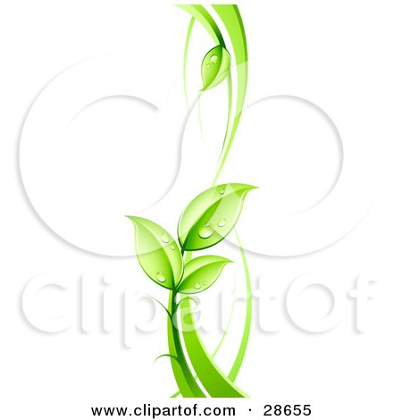 Lush Green Vine With Dew Drops On The Leaves Posters, Art Prints